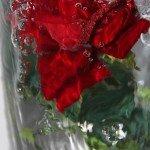 Candi_Catia_1