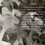 Giannina_Tognetti_Daryl_16