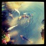 Sergio_Maria_Roscioni_SmartPhotography_06